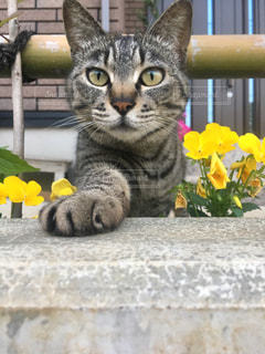 ベンチに座って猫の写真・画像素材[862310]