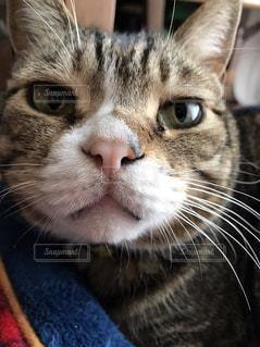 見つめる猫の写真・画像素材[860443]