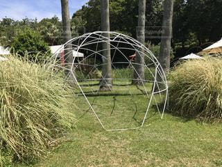 草とドームの写真・画像素材[862012]