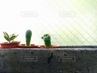れんが造りの建物の上に花の花瓶の写真・画像素材[873437]
