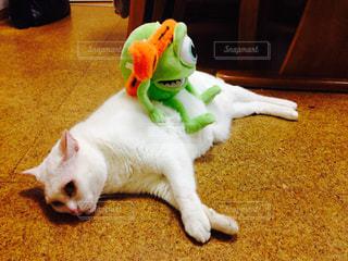 その口を開いて白猫の写真・画像素材[875537]