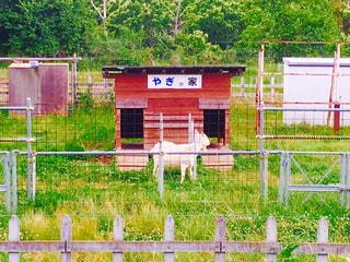 フェンスの前にゲート - No.877545
