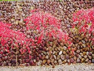 岩の上の果実のグループの写真・画像素材[897730]