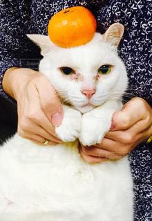 元旦猫の写真・画像素材[899181]