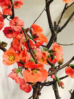 赤い花の上に座っての花で一杯の花瓶 - No.916506