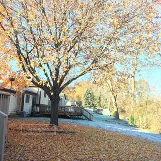裏庭の木の落葉の写真・画像素材[860786]