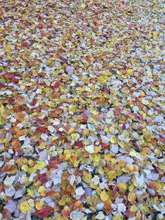 カラフルな落ち葉の写真・画像素材[860793]