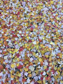 カラフルな落ち葉の写真・画像素材[860797]