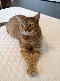 猫三昧の写真・画像素材[26386]