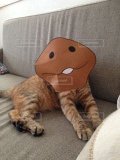 猫三昧の写真・画像素材[26407]