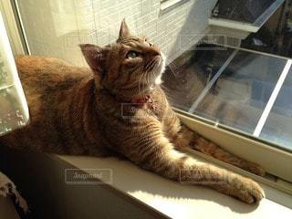 猫三昧の写真・画像素材[26420]
