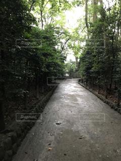 それの両側に木があるパスの写真・画像素材[860956]