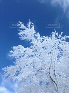 空に白い木 - No.862023