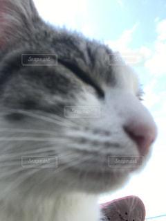 近くに猫のアップ - No.862029