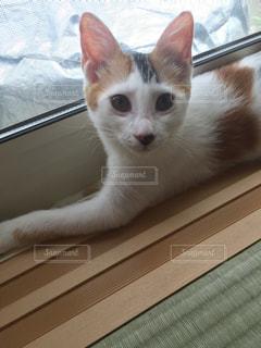 ウィンドウの横に座っている猫の写真・画像素材[862007]