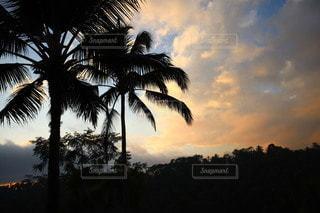 夕陽を眺めながらの写真・画像素材[3332260]