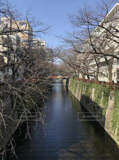 川に石の橋の写真・画像素材[1792280]