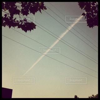 晴れた日にヤシの木のグループの写真・画像素材[914698]