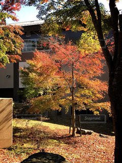 木の前にあるベンチの写真・画像素材[862395]