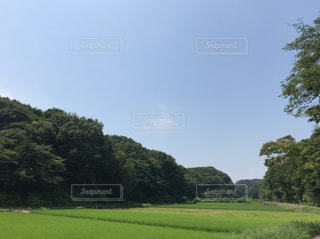 背景の木と大規模なグリーン フィールドの写真・画像素材[1363946]