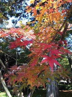 葉っぱのグラデーション - No.862342
