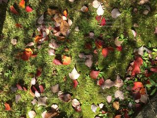 苔のじゅうたんに落ち葉 - No.862398