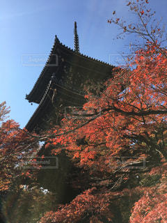 秋の真如堂 三重塔 - No.872708