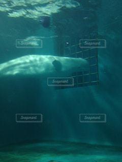 水面下を泳ぐ魚たちの写真・画像素材[862632]
