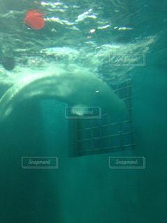 水面下を泳ぐ魚たちの写真・画像素材[862633]