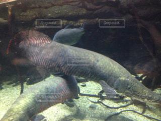 水の動物の写真・画像素材[862666]