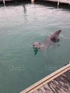 水のプールで泳いでいる犬の写真・画像素材[862726]