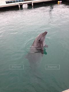 水体で泳ぐ犬の写真・画像素材[862730]