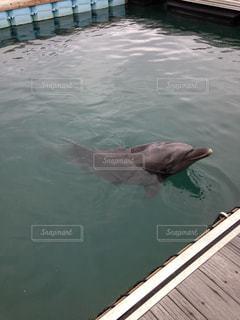 水面下を泳ぐ魚たちの写真・画像素材[862732]