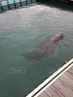 イルカの写真・画像素材[862733]