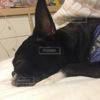 ベッドの上で横になっている黒い犬の写真・画像素材[862797]