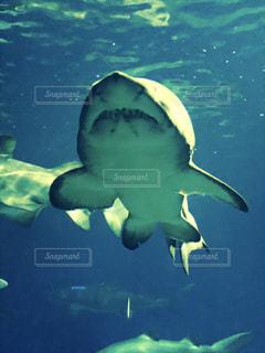 鮫の写真・画像素材[863439]