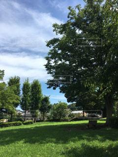 芝生のフィールドのツリーの写真・画像素材[864213]