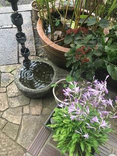 庭の植物の写真・画像素材[864214]