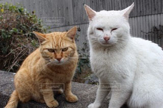 猫の写真・画像素材[26671]