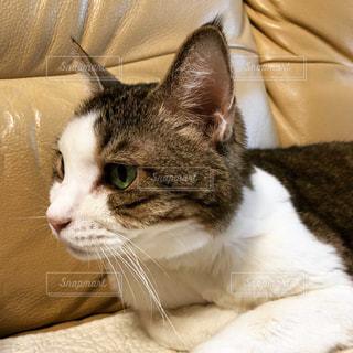 猫の顔 - No.868881