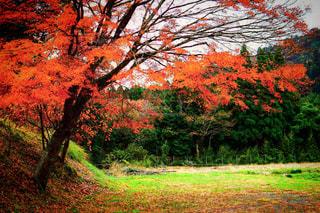 フォレスト内のツリーの写真・画像素材[904344]
