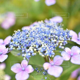 花のクローズアップの写真・画像素材[2231467]