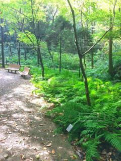 森の写真・画像素材[468382]