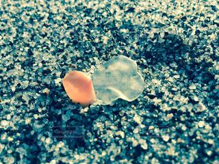 貝殻の写真・画像素材[864028]