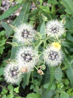 近くの花のアップの写真・画像素材[895477]