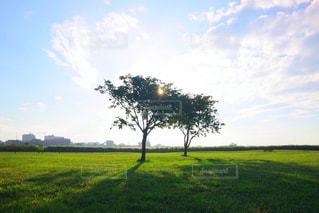 木と空と草原の写真・画像素材[864849]