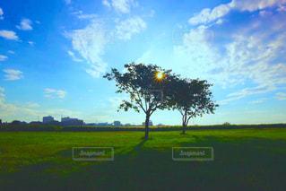 木と空と草原の写真・画像素材[864852]
