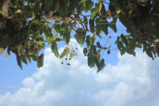 青空と木の写真・画像素材[865084]