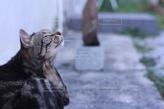 首をかいている猫の写真・画像素材[865571]