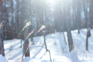 高原の冬の写真・画像素材[865579]